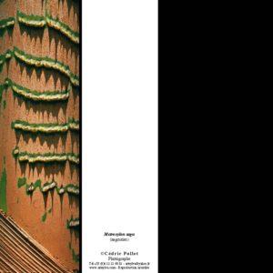 ECORCE de palmier