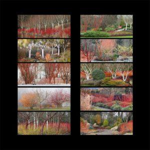 10 cartes postales JARDINS D'HIVER