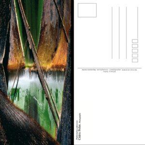 ÉCORCES de bambou1