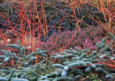 <strong>Bressingham Gardens</strong> (Angleterre)