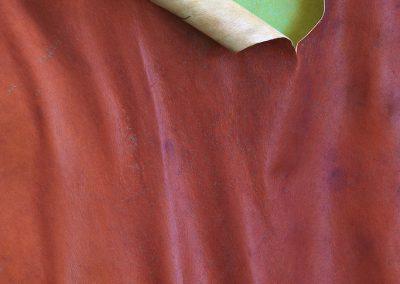 Arbutus x thuretiana - (Arbousier de Thuret - France)