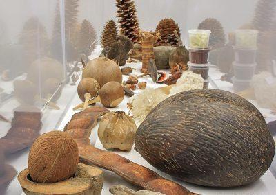 Expositions Fruit & Graines - Photo 04