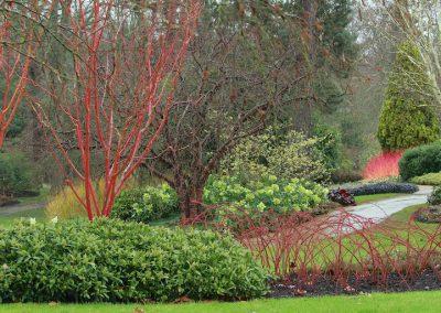 The Savill Garden (Angleterre)